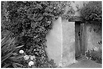 Flowers and wall of Mission. Carmel-by-the-Sea, California, USA (black and white)