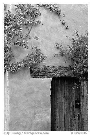 Flowers and wall, Carmel Mission. Carmel-by-the-Sea, California, USA (black and white)