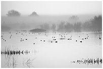 Fog  and water birds, Kern National Wildlife Refuge. California, USA (black and white)