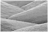 Ridges, Southern Sierra Foothills. California, USA (black and white)