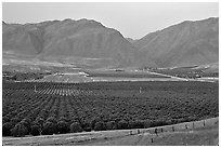 Irigated farmlands, Southern Sierra Foothills. California, USA (black and white)
