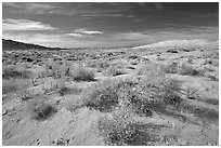 Bushes and Kelso Dunes. Mojave National Preserve, California, USA (black and white)