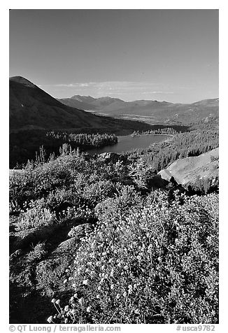 Flowers and Red Lake in the distance. Mokelumne Wilderness, Eldorado National Forest, California, USA (black and white)