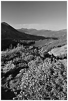 Flowers and Red Lake in the distance. Mokelumne Wilderness, Eldorado National Forest, California, USA ( black and white)