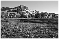 Meadow carpeted with flowers below Round Top Mountain. Mokelumne Wilderness, Eldorado National Forest, California, USA (black and white)