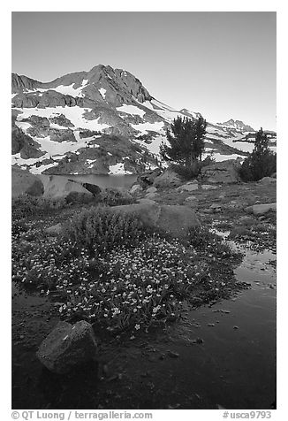 Flowers and Round Top Mountain, sunrise. Mokelumne Wilderness, Eldorado National Forest, California, USA (black and white)
