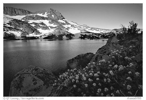 Black And White Picture Photo Flowers Winnemucca Lake And Round