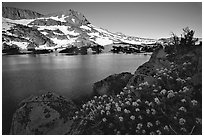 Flowers, Winnemucca Lake,  and Round Top Mountain, sunrise. Mokelumne Wilderness, Eldorado National Forest, California, USA (black and white)