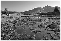 Flooded Meadow, early morning. Mokelumne Wilderness, Eldorado National Forest, California, USA ( black and white)