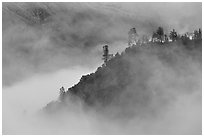 Trees and ridge in fog,  Stanislaus  National Forest. California, USA (black and white)