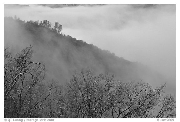 Ridge in fog,  Stanislaus  National Forest. California, USA (black and white)