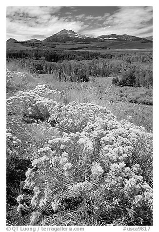 Sagebrush and Sierra, Conway summit. California, USA (black and white)