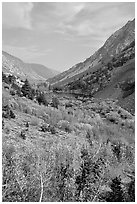 Lundy Canyon in the fall, Inyo National Forest. California, USA ( black and white)