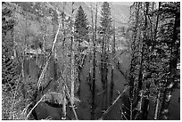 Beaver Pond, Lundy Canyon, Inyo National Forest. California, USA (black and white)
