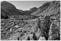 Valley in autumn, Lundy Canyon, Inyo National Forest. California, USA (black and white)