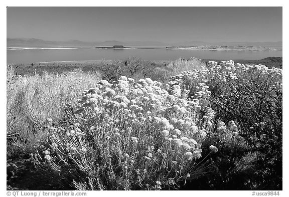 Sage and lake seen from the visitor center. Mono Lake, California, USA (black and white)