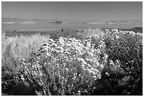 Sage and lake seen from the visitor center. Mono Lake, California, USA ( black and white)