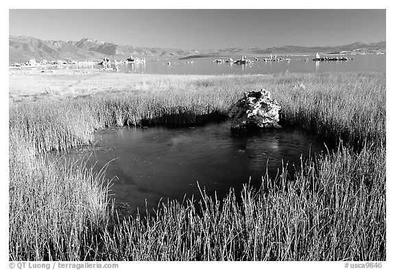 Grasses and spring with small tufa being formed underwater. Mono Lake, California, USA (black and white)