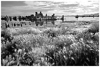 Grasses and Tufa towers, morning. Mono Lake, California, USA (black and white)