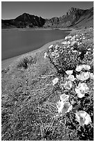 Flowers on the shores of June Lake. California, USA (black and white)