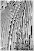 Columns of  basalt, afternoon,  Devils Postpile National Monument. California, USA ( black and white)