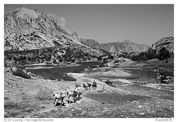 Pack train of horses, Bishop Pass trail, Inyo National Forest. California, USA
