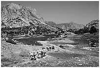 Pack train of horses, Bishop Pass trail, Inyo National Forest. California, USA (black and white)