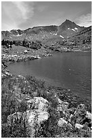 Indian Paintbrush and Saddlebag Lake, Inyo National Forest. California, USA ( black and white)