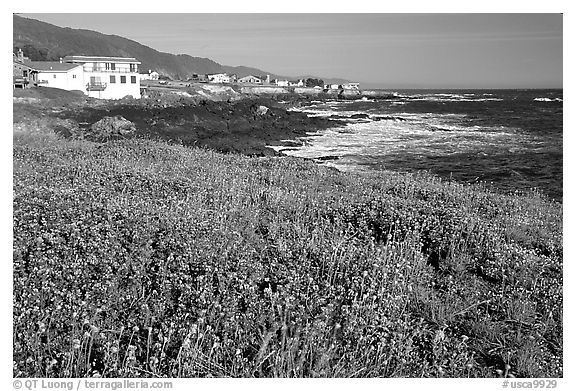 Wildflower field and village, Shelter Cove, Lost Coast. California, USA (black and white)