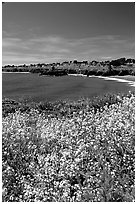 Spring wildflowers and Ocean, Mendocino in the background. California, USA (black and white)