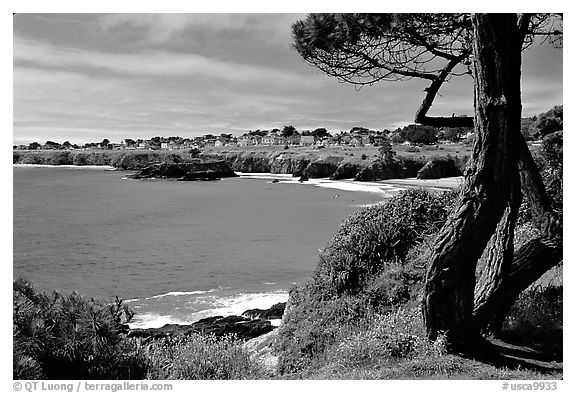 Tree and Ocean. Mendocino, California, USA (black and white)