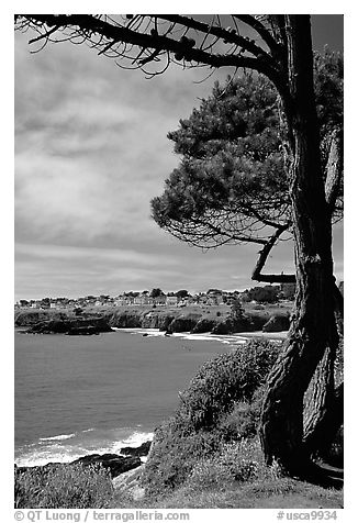 Tree, ocean, town on a bluff. Mendocino, California, USA (black and white)