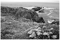 Pictures of Mendocino Coast