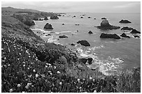 Iceplant and coast near Ocean View. Sonoma Coast, California, USA (black and white)