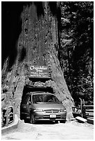 Van driving through the Chandelier Tree, Leggett, afternoon. California, USA (black and white)