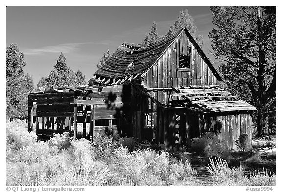 Abandoned wooden cabin. California, USA (black and white)