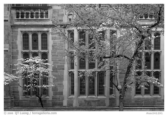 Spring leaves, blooms, and facade detail. Yale University, New Haven, Connecticut, USA (black and white)