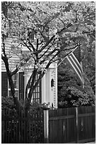 Tree in bloom, white facade, and flag, Essex. Connecticut, USA ( black and white)