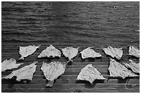 Fish flakes. Mystic, Connecticut, USA ( black and white)