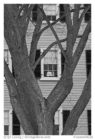 Tree and facade, Hawkes House, Salem Maritime National Historic Site. Salem, Massachussets, USA (black and white)