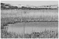 Reeds in Pilgrim Lake and parabolic dunes, Cape Cod National Seashore. Cape Cod, Massachussets, USA ( black and white)