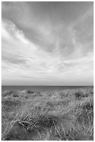 Dunegrass and clouds, Race Point Beach, Cape Cod National Seashore. Cape Cod, Massachussets, USA (black and white)