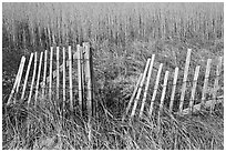 Fence and tall grass, Cape Cod National Seashore. Cape Cod, Massachussets, USA (black and white)