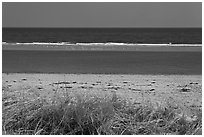 Grass, beach, and sand bar, Cape Cod National Seashore. Cape Cod, Massachussets, USA (black and white)