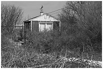 Cottage and bare shrubs, Truro. Cape Cod, Massachussets, USA (black and white)