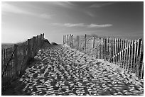 Path between sand fences, Cape Cod National Seashore. Cape Cod, Massachussets, USA (black and white)