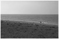 Distant couple on beach, Cape Cod National Seashore. Cape Cod, Massachussets, USA ( black and white)