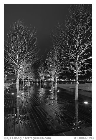 Illuminated trees and reflections. Boston, Massachussets, USA