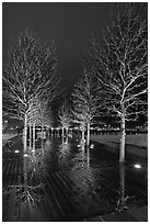 Illuminated trees and reflections. Boston, Massachussets, USA (black and white)
