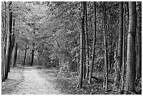 Battle road near Meriams Corner, Minute Man National Historical Park. Massachussets, USA (black and white)